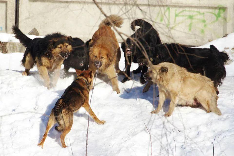 ВМахачкале родители загрызенного собаками ребенка получат 3 млн руб.