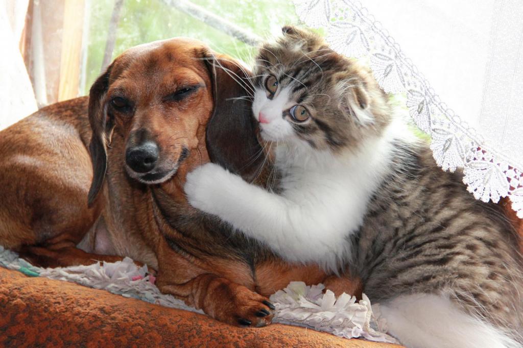 его коты и собаки вместе фото другой