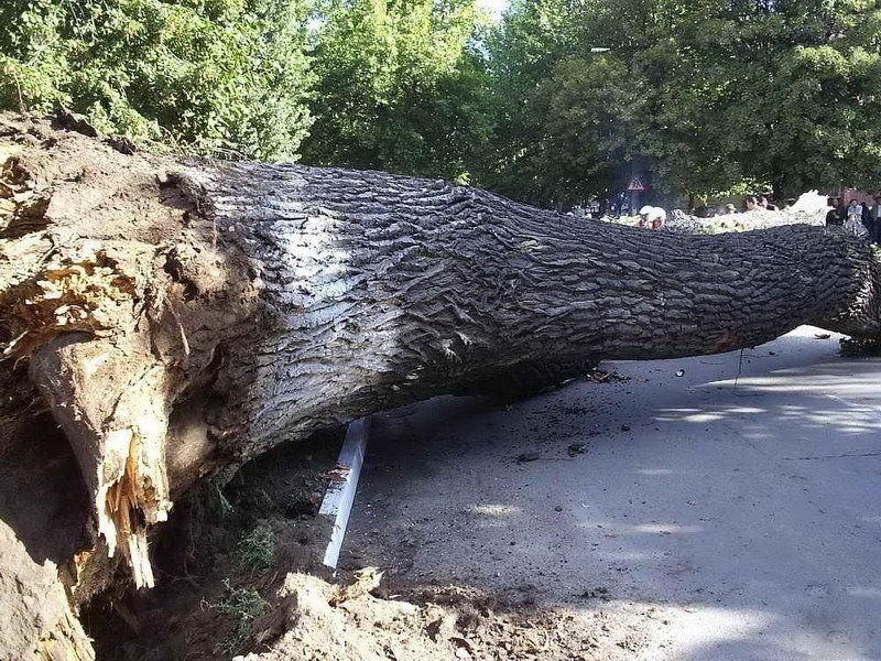 ВСтаврополе за2016 год рухнуло 450 деревьев