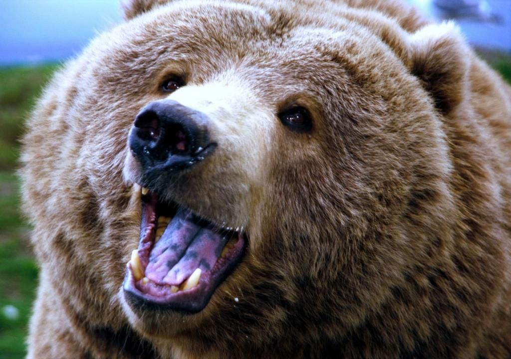 Медведя привели нафутбольный матч вПятигорске