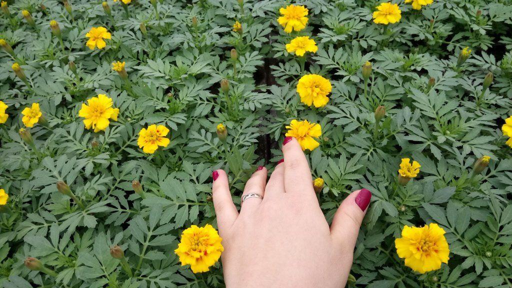 ВМахачкале планируют высадить около млн. цветов