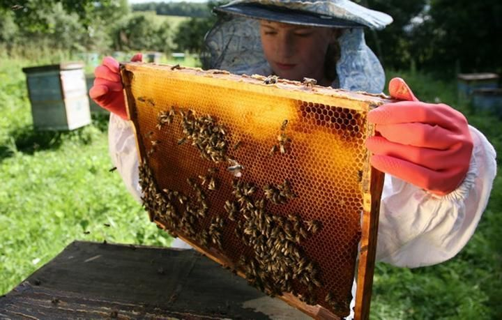 Конкурс пчеловодов уфа 2018