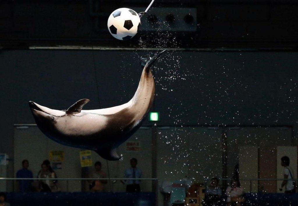 ВСочи дельфины сыграют вфутбол сморскими львами